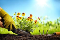 planting.jpg -