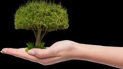 strom.jpg -