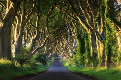 cesta lesom.jpg -