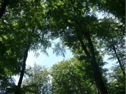 strom - strom.jpg